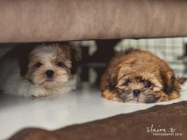puppies-17