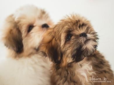 Puppies Shoot Elaine Z Photo